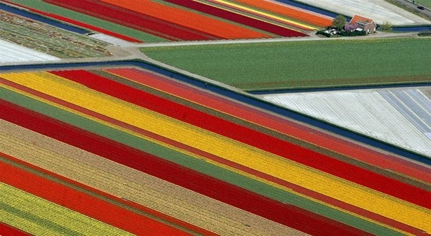 4. Tulip fields - Lisse, Netherlands