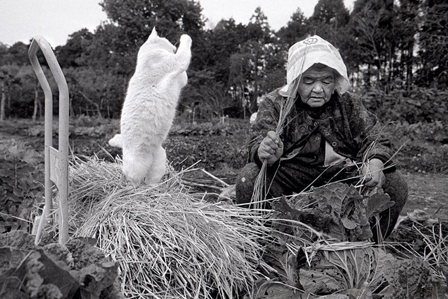 grandmother-and-cat-miyoko-ihara-fukumaru-10