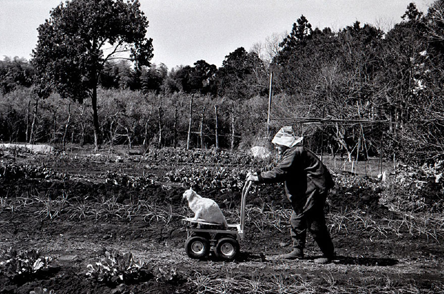 grandmother-and-cat-miyoko-ihara-fukumaru-5