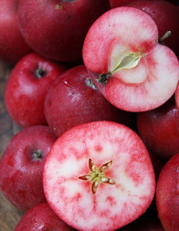 spania poikilia milon - red apples (3)