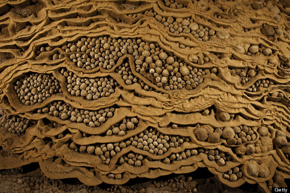 Rare cave pearls fill dried-out terrace pools in Hang Son Doong.